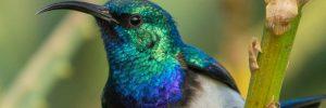 2hummingbird2